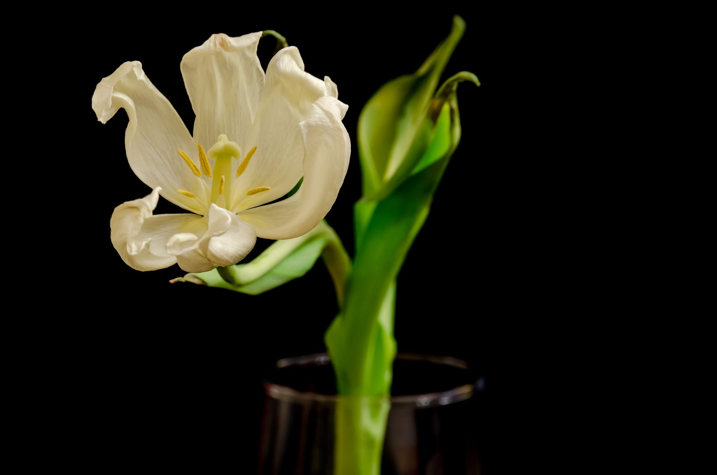 город тюльпаны увядшие фото специалистов для деятельности