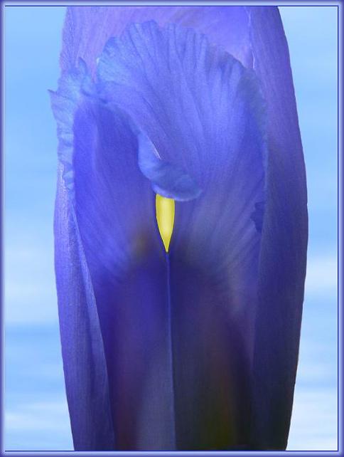 Эротические фотографии цветов