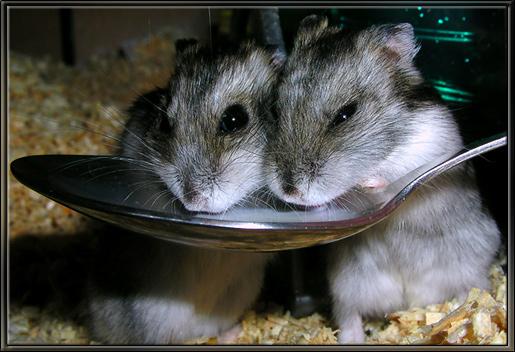 пить молоко ловит мышей живет в лесу