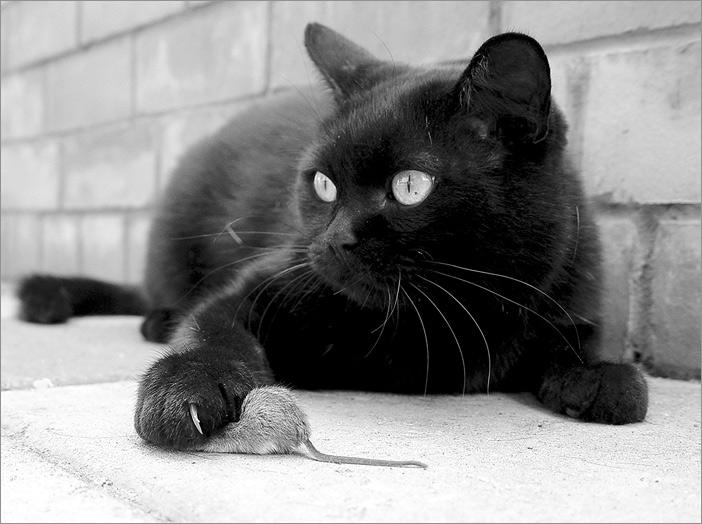 Поздравление днем, белые картинки с кошками и надписями