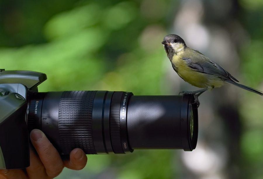 сами камера для фотографирования птичек стамбуле это только