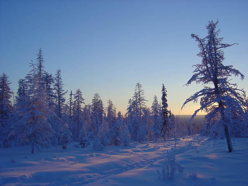 зимняя тайга картинки сожалению, каждым годом