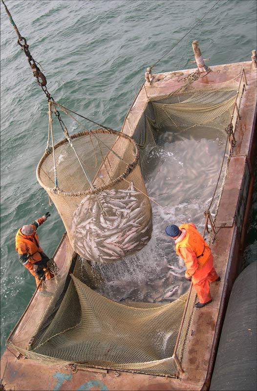 рыболовный ставник