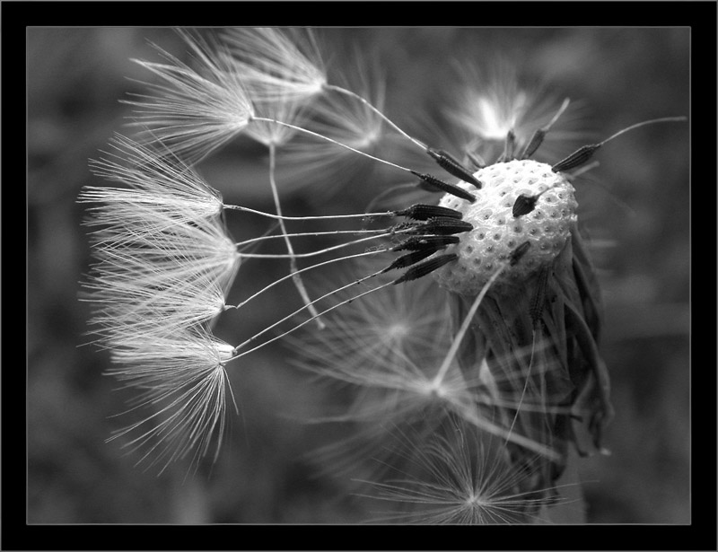 Я считал и считаю, что черно белая фотография намного сильнее цветной.