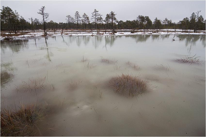 Весеннее болото - Раздел природа - Фотография на фотосайте.