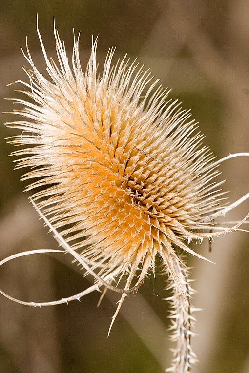 Большая их часть характерна для луговых степей (север степной зоны), но есть растения настоящих степей и даже...