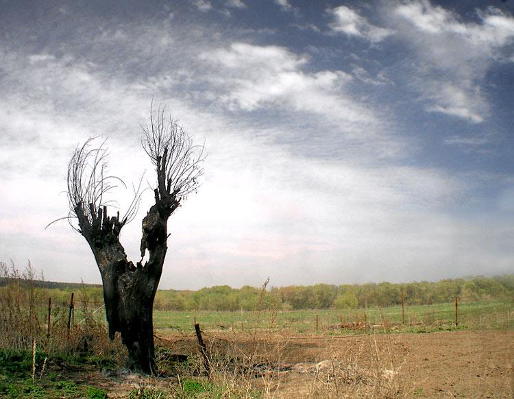 Обгоревшее дерево. 367683