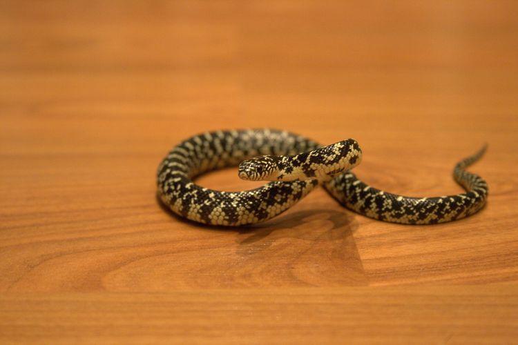 Маленький змей.