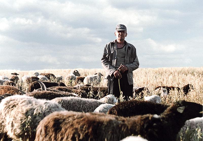 призвано картинка пастуха с бараном сожалению, все