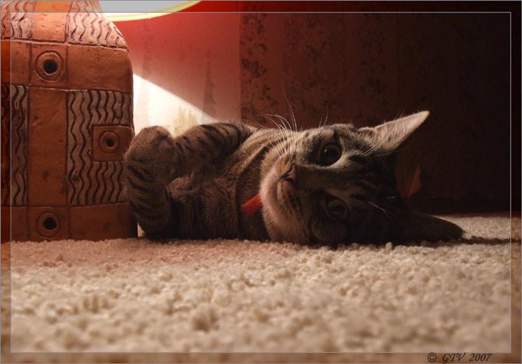 .:Просто Кот:.
