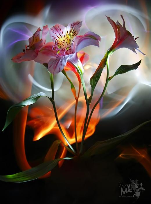 Доброй ночи открытки с цветами 3