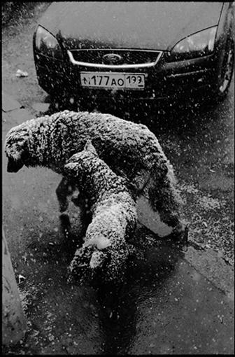 http://pics.photographer.ru/nonstop/pics/pictures/542/542496.jpg