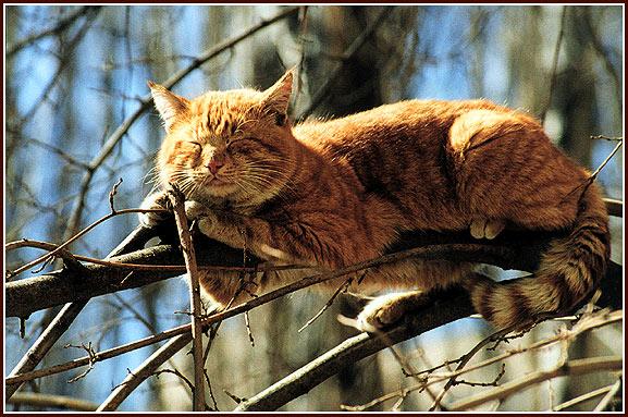 Секс кошек в марте
