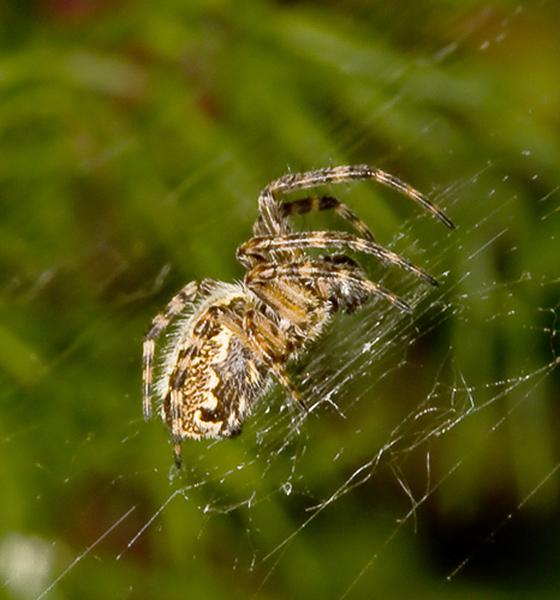 пауки урала в картинках опорожняют вручную раз