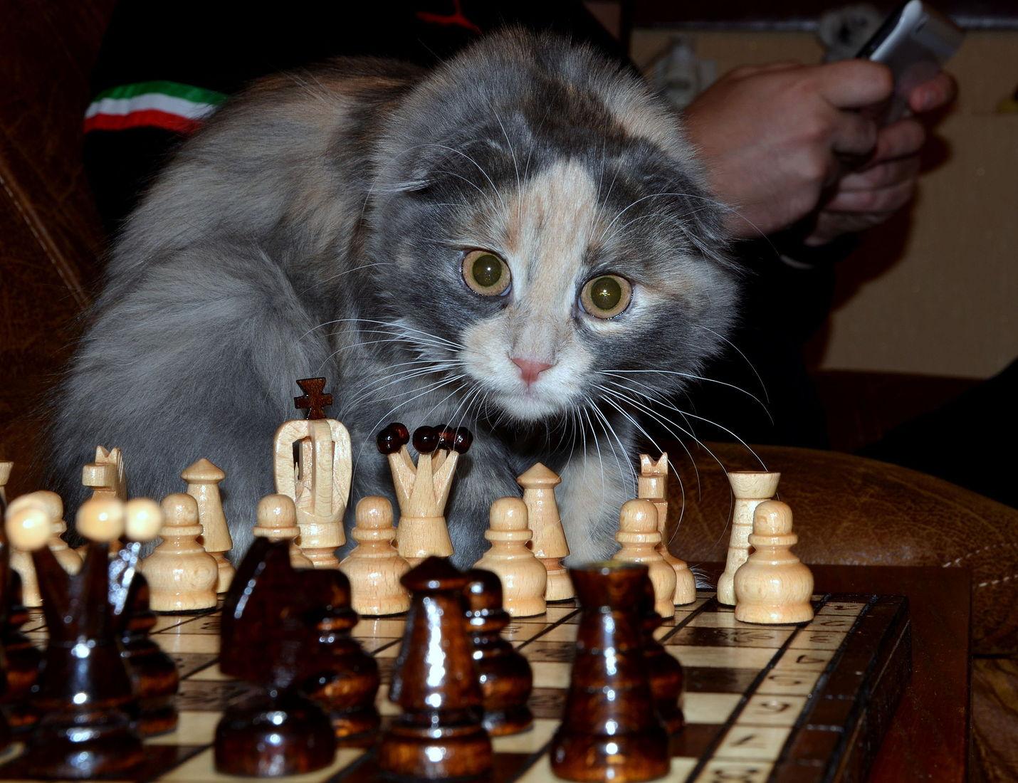 Картинки смешных шахмат, надписями всегда буду