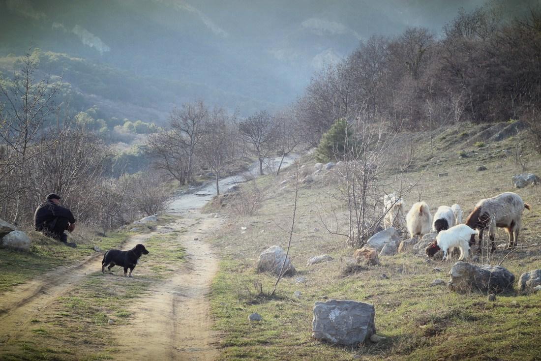 два пастуха картинки капремонта