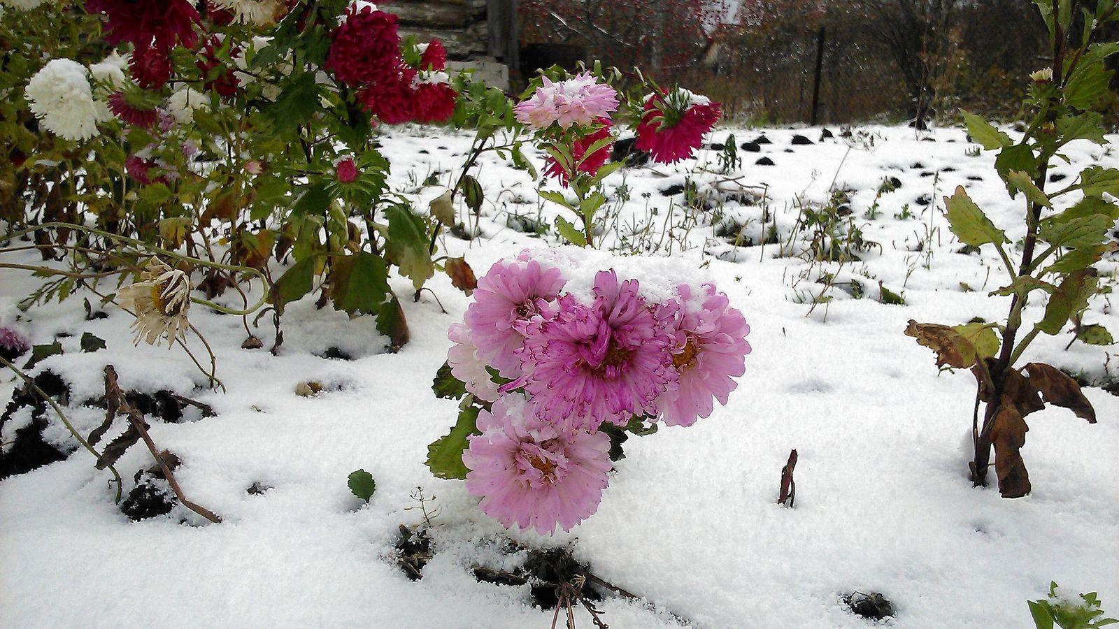 изделие картинки ноябрь цветы того, это единственный