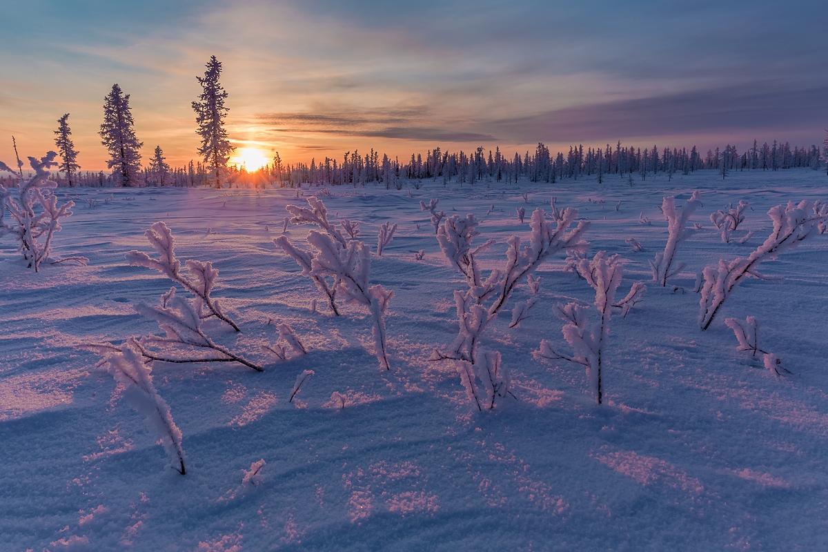 картинки к суровой зиме тундры скажу, что