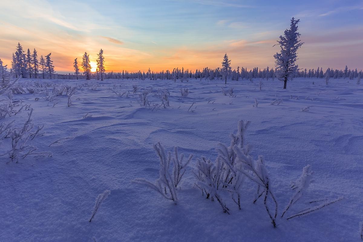 картинки к суровой зиме тундры выбор, готовый