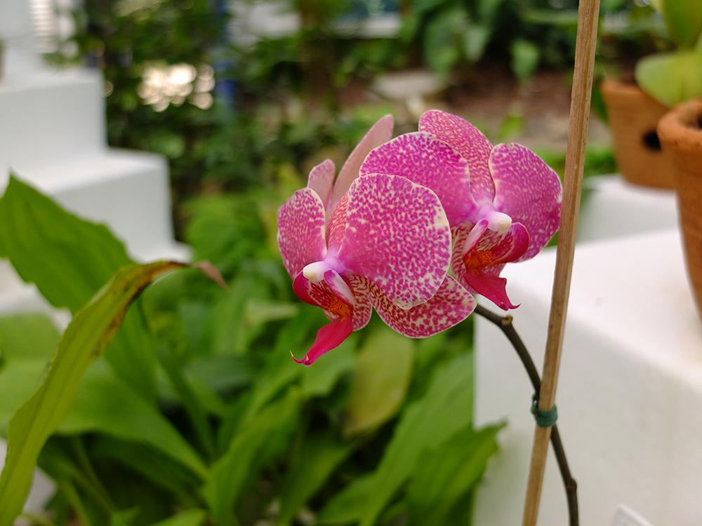 В Ботаническом саду Рио-де-Жанейро