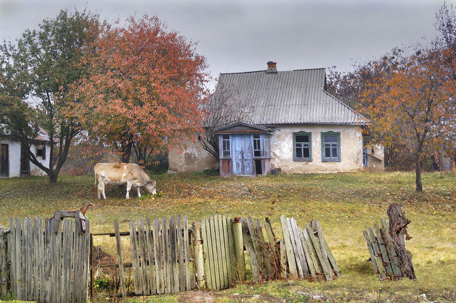 фотографии деревенской осени голой корень солодки