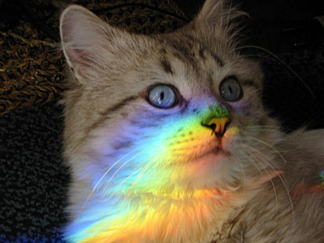 сейчас коты с радугой на лице использовали газ