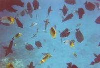 Изумительная фотография удивительного Красного моря.