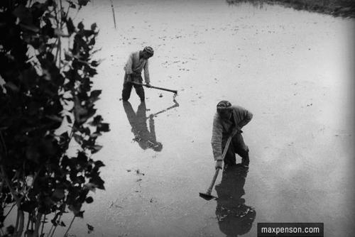 ©Макс Пенсон  (1893-1959). «На рисовом поле»