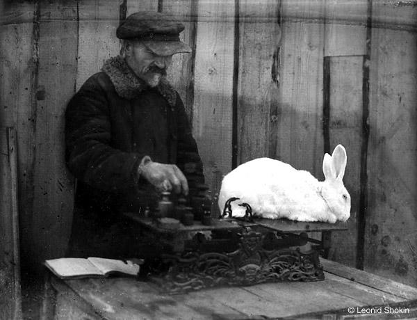 &copy;Леонид Шокин. «Взвешивание кролика. 1934-36 гг. <br>  Современный отпечаток &copy; Собрание  М.Голосовского»