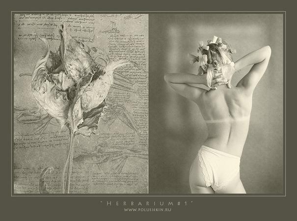 """Андрей Полушкин. Herbarium # 1 """"Гербарий"""" """"Herbarium"""" 2005"""