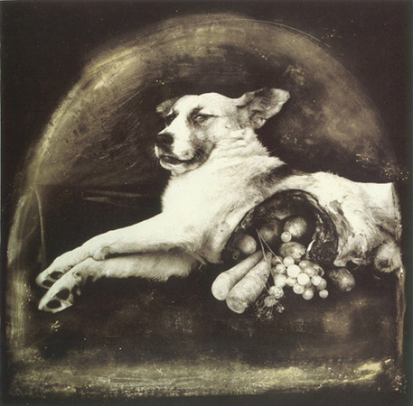 © Joel-Peter Witkin<br /> The result of war The cornucopian dog, 1984