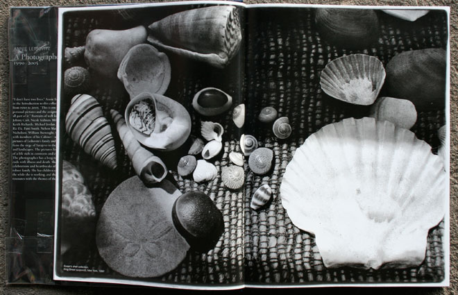 Susan&rsquo;s shell collection,<br /> King Street sunprch, New York, 1990