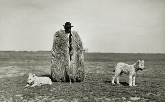 Shepherd with his Dogs— Rudolf Balogh, 1930. Gelatin silver print. Hungarian Museum ofPhotography.