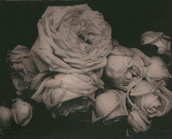 Edward Steichen. Heavy Roses, Voulangis, France (Rosas intensas, Voulangis, Francia), 1914.  Copia positiva de plata en gelatina, positivada ca.1960. 20,3 x 25,4 cm. Cortesía de Howard Greenberg Gallery, New York.  © Joanna T. Steichen