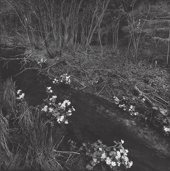 ©Галина Лукьянова. «Лесной ручей. Купавницы. Из серии Русалина неделя. 1992»