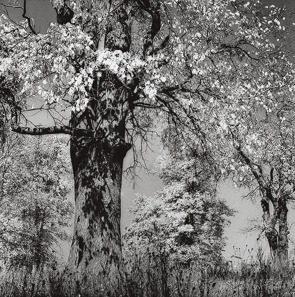 ©Галина Лукьянова. «Октябрь. Из цикла Осенняя тетрадь. 1988»