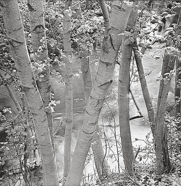 ©Галина Лукьянова. «Июнь. Из цикла Солнцеворот. 1978-1992»