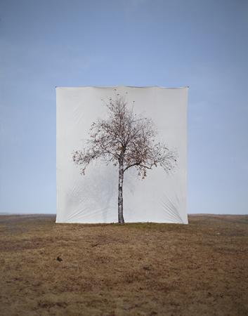 Мён-Хо Ли, Дерево #1, 125 х 100cm, C-print, 2006