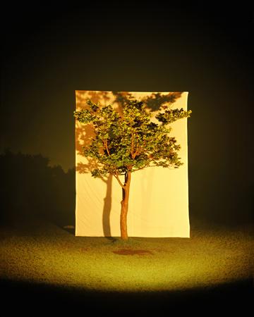 Мён-Хо Ли, Дерево #7, 125 х 100cm, C-print, 2006