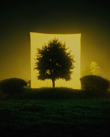 Мён-Хо Ли, Дерево #8, 125 х 100cm, C-print, 2006