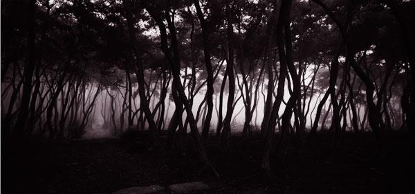 Пэ Бьен У, Сосны, 260 x 135cm, C-print, 1992
