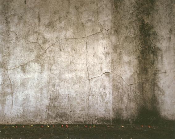 Хён-Гын Пак, Упавшие вишни, 100 x 125cm, C-print, 2006