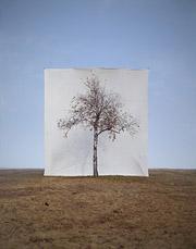 Мён-Хо Ли «Дерево #1»