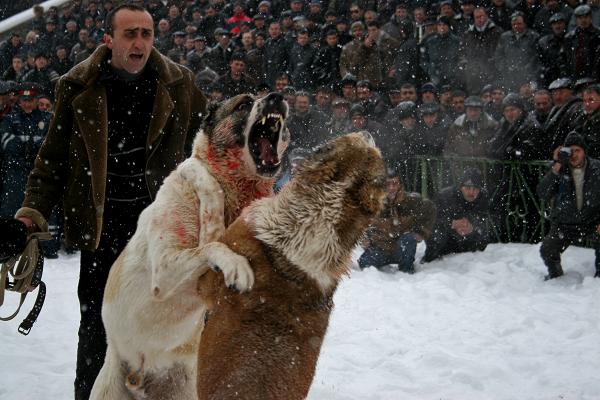 Айрапетян Анаит (г.Ереван, Армения)