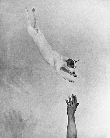 "Martin Munkacsi, ""Jumping fox terrier,"" ca. 1930, © Joan Munkacsi, Courtesy of The Estate of Joan Munkacsi"