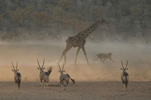 The Show – Catriona Parfitt, UK. Winner, young wildlife photographer of the year