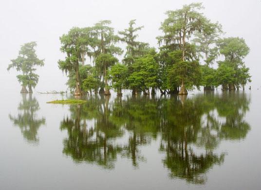 Swamp cypress - Cece Fabbro, USA. Winner, in praise of plants category