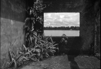 Jesus Abad Colorado. I Municipio de Bojaya-Choco. Nature, like resistance, sprouts anew in the destroyed and abandoned police headquarters of the town, attacked by guerillas in 2000.  Series: Landscapes and Battles:Two wings wait for the end of the tragedy. Black and White. Ilford HP5. 70 x 105 cm. 2002. Rio Atrato, Colombia
