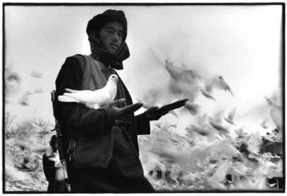 <p>Вольф Бевиг Афганистан: Мигозарад FENSTER61</p>