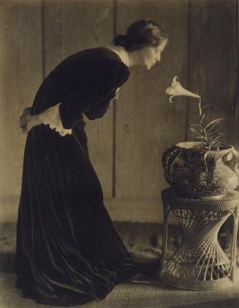 Ева Уотсон-Шутце<br>Женщина с лилией<br>платиновый отпечаток, 1905